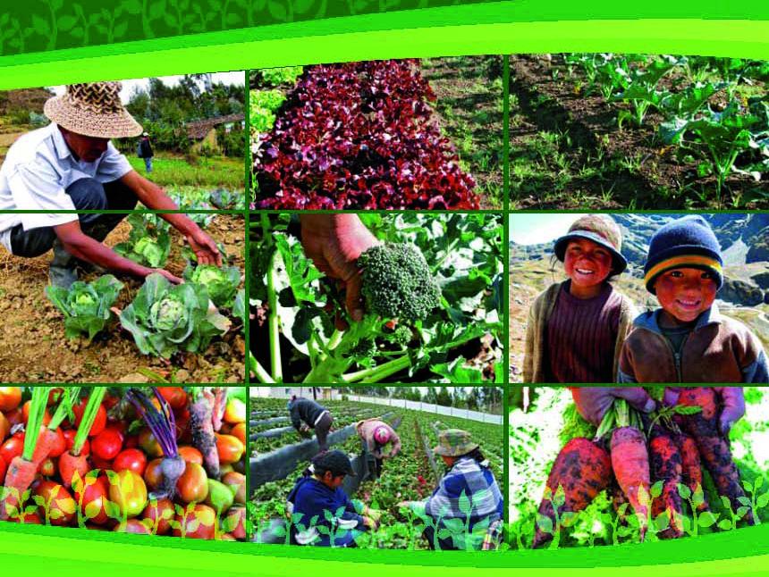Agricultura de subsistencia en la Región Andina