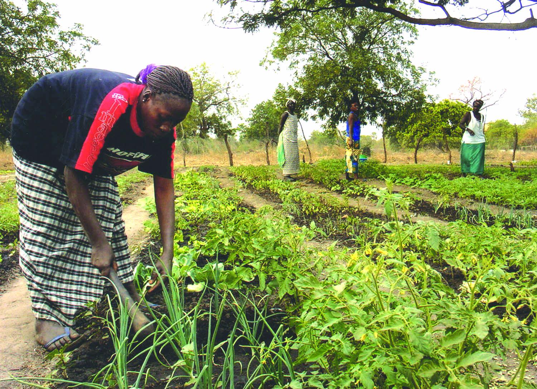 África: Desafíos y Oportunidades